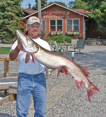 Rob 34 inch muskie